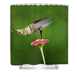Shower Curtain featuring the mixed media Sun Sweet by Christina Rollo