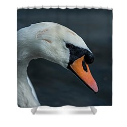 Shower Curtain featuring the photograph Swan Head Close Up On Blue Background by Scott Lyons