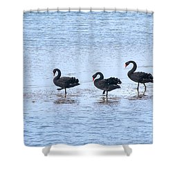 Swans On Parade Shower Curtain