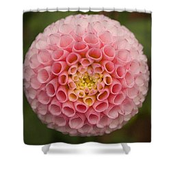 Symmetrical Dahlia Shower Curtain