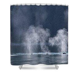 Shower Curtain featuring the photograph Synchronized Swimming Humpback Whales Alaska by Nathan Bush