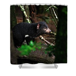 Shower Curtain featuring the photograph Tasmanian Devil Found During The Day In Tasmania. by Rob D