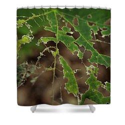 Tasty Tree Shower Curtain