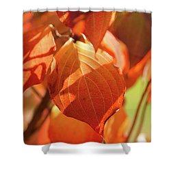 That Autumn Light Shower Curtain