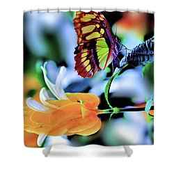 The Charm Of A Butterfly Shower Curtain