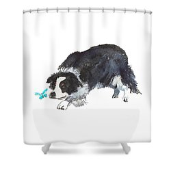 The Collie And Blue Butterfly Shower Curtain