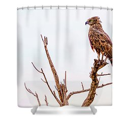 Shower Curtain featuring the photograph The Crowned Eagle by Kay Brewer