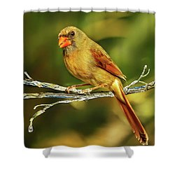 The Female Cardinal Shower Curtain