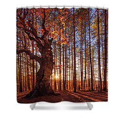 The King Of The Trees Shower Curtain