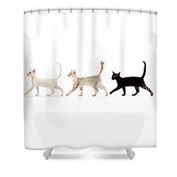 The Kits Parade - Three Shower Curtain