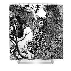 Shower Curtain featuring the photograph The Leopard Sits In Wait In Black And White by Kay Brewer