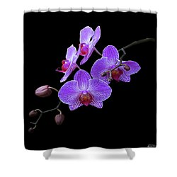The Orchids Shower Curtain