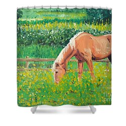 The Palomino And Buttercup Meadow Shower Curtain