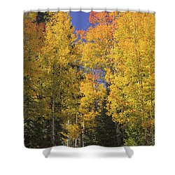 Shower Curtain featuring the photograph The Road A Little Less Traveled by Rick Furmanek