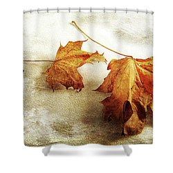 Shower Curtain featuring the photograph The Sound Of Autumn by Randi Grace Nilsberg
