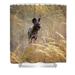 Shower Curtain featuring the photograph The Wild Dog Of Africa by John Rodrigues