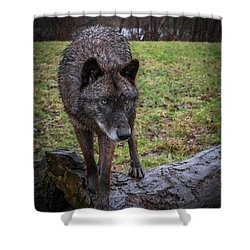This Is My Log Shower Curtain