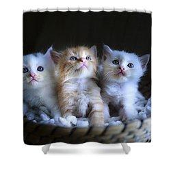 Three Little Kitties Shower Curtain