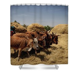 Threshing Shower Curtain