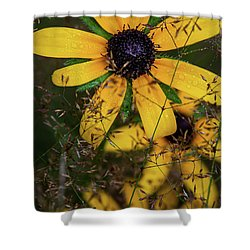 Shower Curtain featuring the photograph Through The Meadow Grasses by Dale Kincaid