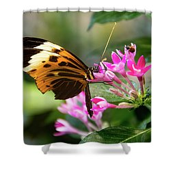 Tiger Longwing Butterfly Drinking Nectar  Shower Curtain