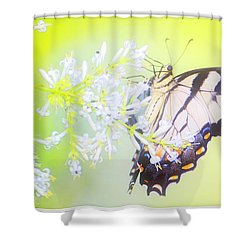 Tiger Swallowtail Butterfly On Privet Flowers Shower Curtain