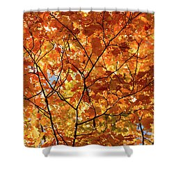 To Be Up In The Trees Shower Curtain