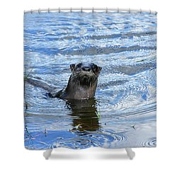 To My Otter Amazement Shower Curtain