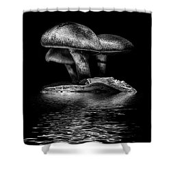 Toadstools On A Toronto Trail Reflection 3 Shower Curtain