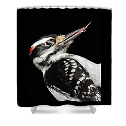 Shower Curtain featuring the photograph Tongue Of Woodpecker by Debbie Stahre