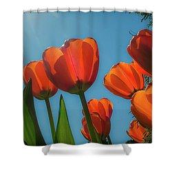 Towering Tulips Shower Curtain