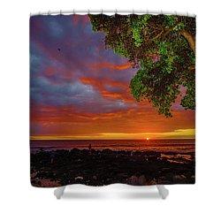 Tree  Sea And Sun Shower Curtain