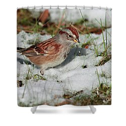 Shower Curtain featuring the photograph Tree Sparrow In Snow by Debbie Stahre