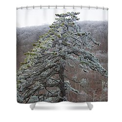 Tree With Hoarfrost Shower Curtain