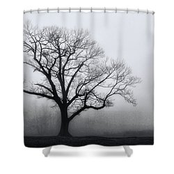 Trees In Fog # 2 Shower Curtain