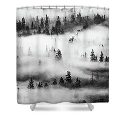 Shower Curtain featuring the photograph Trees In The Mist 3 by Stephen Holst