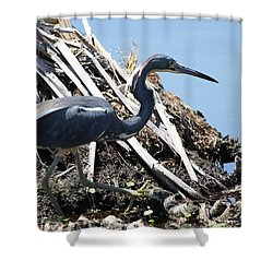 Tri-colored Heron 40312 Shower Curtain