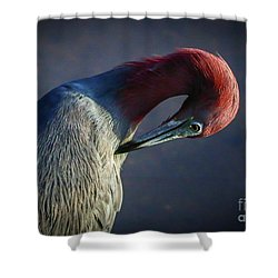 Tricolor Preening Shower Curtain