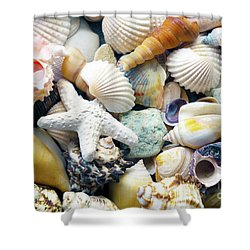 Shower Curtain featuring the photograph Tropical Treasure Seashells B91218 by Mas Art Studio