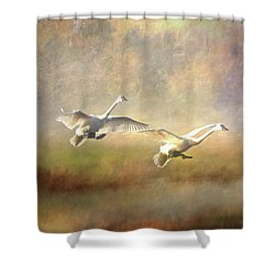 Trumpeter Swan Landing - Painterly Shower Curtain