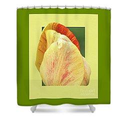 Tulip Petals Escaping Shower Curtain