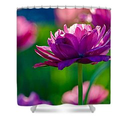 Tulips In Bloom Shower Curtain