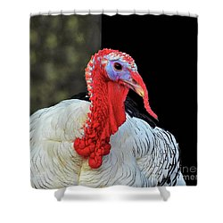 Turkey Tom Shower Curtain