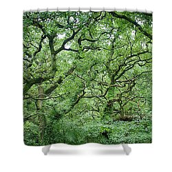 Shower Curtain featuring the photograph Twisted Forest Full Color by Nathan Bush