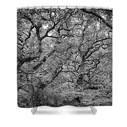 Shower Curtain featuring the photograph Twisted Forest by Nathan Bush