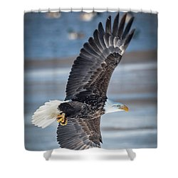 Under Wing Shower Curtain