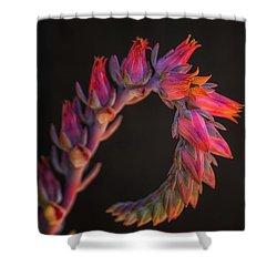Vibrant Arc Shower Curtain