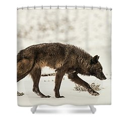 W13 Shower Curtain