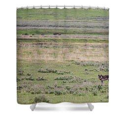 W26 Shower Curtain