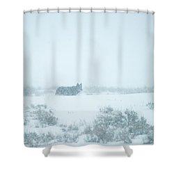 W29 Shower Curtain